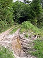 Muddy track in Brechfa forest. - geograph.org.uk - 1337546.jpg