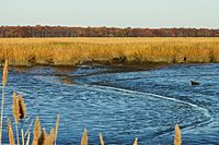 Mudflats left behind by a receding tide at Bombay Hook National Wildlife Refuge.jpg