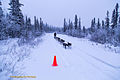 Musher Heidi Sutter and dog sled team (16644205662).jpg