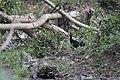 Muthora bird.jpg