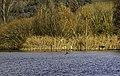 NSG Halbinsel im Kleinen Brombachsee 01.jpg