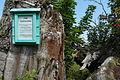 Napoleon Bonaparte Oak in Borkowo.JPG