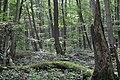 Nationalpark Hainich (7).jpg