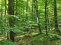 Nationalpark Hainich craulaer Kreuz 2020-06-03 12.jpg