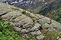 Nationalpark Hohe Tauern - Gletscherweg Innergschlöß - 16 - Pflanzen in Felsritzen.jpg