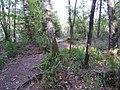 Natur pur am Birkensee 1 - panoramio.jpg