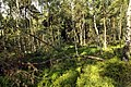 Nature reserve Rájecká rašeliniště in summer 2014 (3).JPG