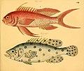 Naturgeschichte in Bildern mit erläuterndem Text (Taf. CII) (6058675791).jpg