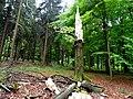 Naturpark Arnsberger Wald fd (15).jpg
