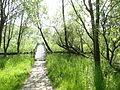 Naturschutzgebiet Heuckenlock 21.05.2014 Phase 65.JPG
