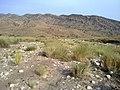 Navidhand new 363 - panoramio.jpg