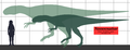 Neovenator SIZE.png