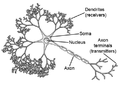 Neuron figure.png