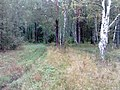 Nevyanskiy r-n, Sverdlovskaya oblast', Russia - panoramio (166).jpg