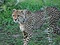 Ngorongoro (30) (14168815423).jpg