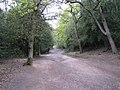 Nut Hurst Glade, Sutton Park - geograph.org.uk - 1859616.jpg