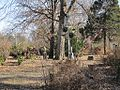Oaklawn Garden 2011-01-29 Poplar Pike Germantown TN 79.jpg