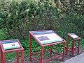 Ogród roślinności tatrzańskiej kosodrzewina.jpg