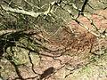 Old holloway, Garbutt Wood - geograph.org.uk - 716919.jpg