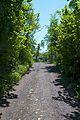 Oldtidsveien Østensjø - 2012-05-27 at 12-36-24.jpg
