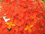 Orange flower0001.JPG