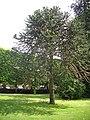 Orléans - jardin des plantes (45).jpg