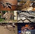 Ornithischia montage.jpg