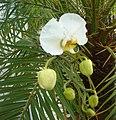 Orquidea004.JPG