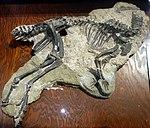 Othnielosaurus BYU.jpg