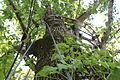 Oxbow Meadows TreeTop Canopy Trail Detail.JPG