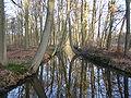 P2102081 Oelerbeek in februari.JPG
