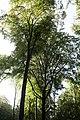 PM 112973 B Koppenberg.jpg