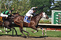 Paco Lopez Wins on Where's Sterling (3) (6068157752).jpg