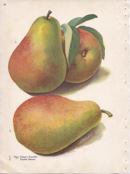 File:Page 10 pear - Clapp Favorite, Fayette Beauty.tiff