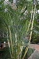 Palmera Mariposa (1) (11983413326).jpg