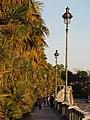 Palmiers Pau.jpg