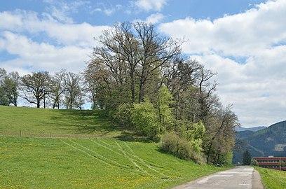 Pannonischer Mischwald Töllergraben GLT 0028.jpg