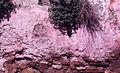 Paolo Monti - Servizio fotografico (Procida, 1972) - BEIC 6359559.jpg