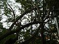 Parque de Bolívar (4). Cartago, Valle, Colombia.JPG