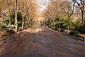 Parque maria luisa 2012003.jpg