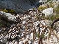 Particolare delle funi abbandonate della dismessa funivia della Paganella 4.jpg