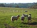 Pasture, Hambleden - geograph.org.uk - 735498.jpg