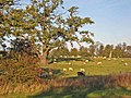 Pasture on the Snape Castle estate - geograph.org.uk - 274538.jpg