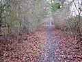 Path skirting Church Plantation - geograph.org.uk - 1724006.jpg