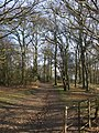Path through Hainault Forest Country Park (2) - geograph.org.uk - 1650631.jpg