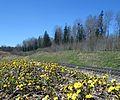 Pavasara diena Rudbāržu pagastā.jpg