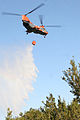 Pedro Trains to Fight Forest Fires DVIDS328971.jpg