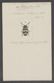 Pelecophorus - Print - Iconographia Zoologica - Special Collections University of Amsterdam - UBAINV0274 025 09 0072.tif