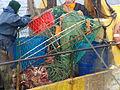 Pesca de centolla en la Bahía Ushuaia 31.JPG