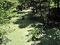 Peterson Lake Nature Center Collierville TN 08.jpg